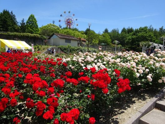 蜂ヶ峯総合公園 バラ園