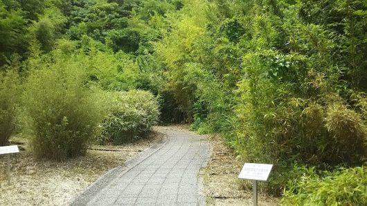 バンブージョイハイランド 竹の生態園