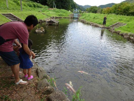 親子孫水車 鯉