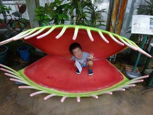 広島市植物公園 食虫植物展
