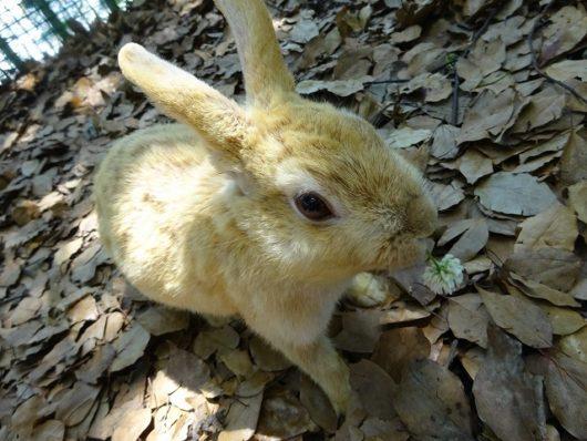 蜂ヶ峯総合公園 ウサギ